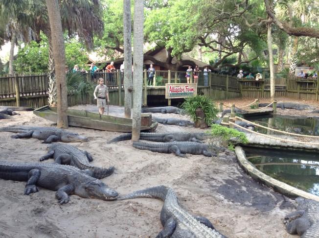 鱷魚養殖場動物園每天都有各種展覽和表演。