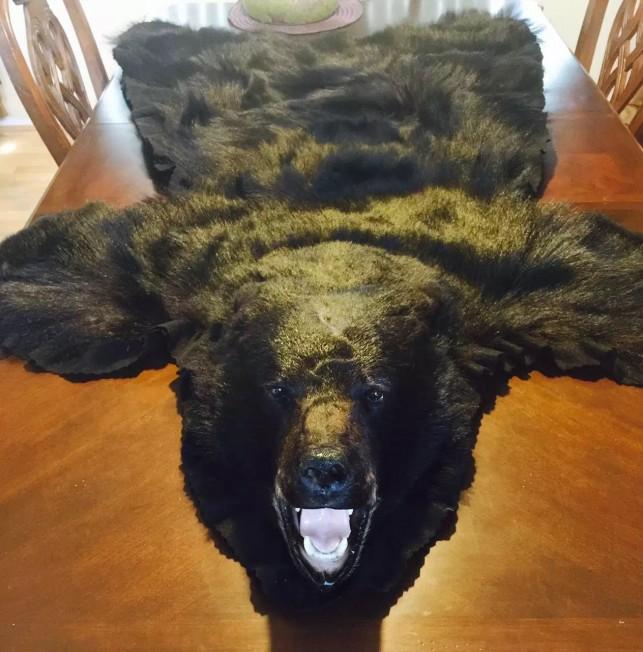 黑熊皮标本可作为家中装饰。(记者张宏/摄影)