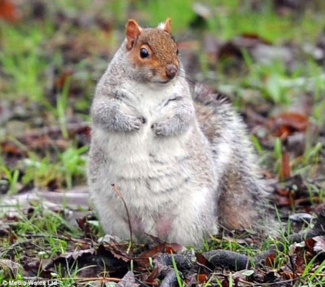 「我看起來很胖嗎?」(取材自英國每日郵報)