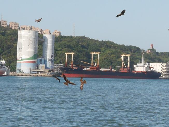 基隆港的老鷹很療癒。(記者吳淑君/攝影)