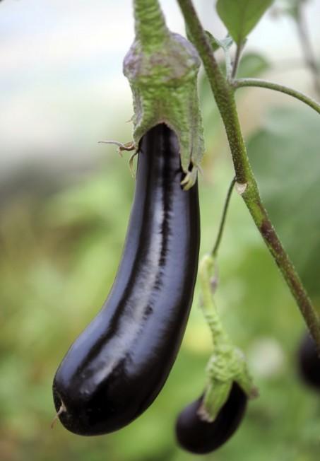茄子的外皮含有豐富的抗氧化劑茄色色素。(Getty Images)