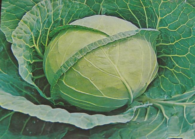 玻璃菜。(翠軒攝影)