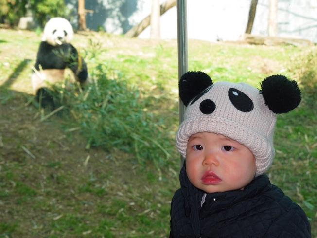 民眾把握最後機會與熊貓寶寶道別。(記者胡毓玲/攝影)