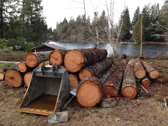 砍下的樹木,鋸成一段段樹幹。