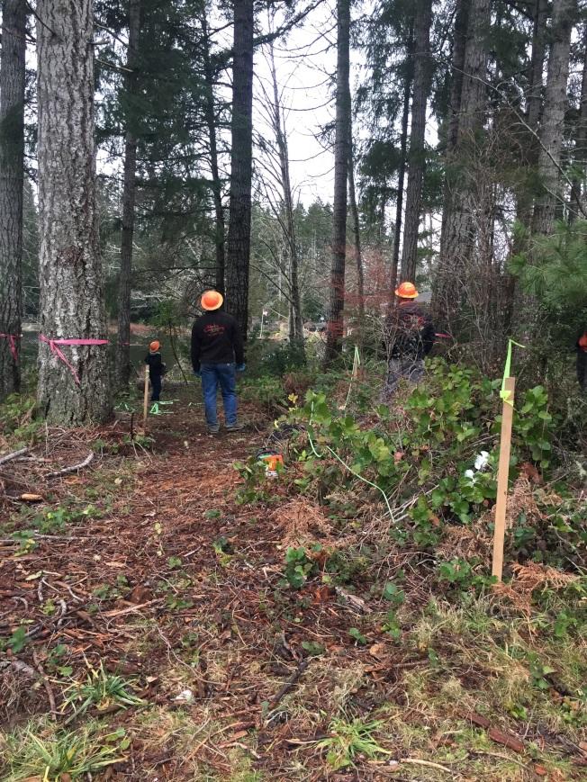 標定地界後,就開始砍樹。