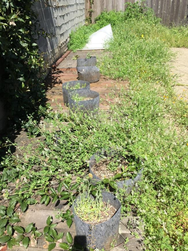 花園裡堆滿種植大麻用的盆栽泥土。