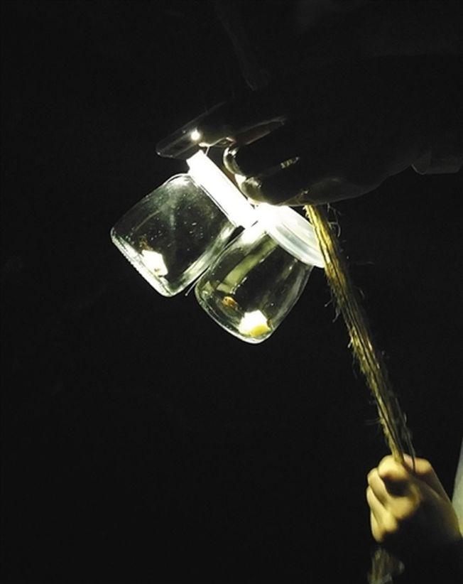 在活動現場,主辦方將螢火蟲置於瓶內展覽。(取材自新京報)