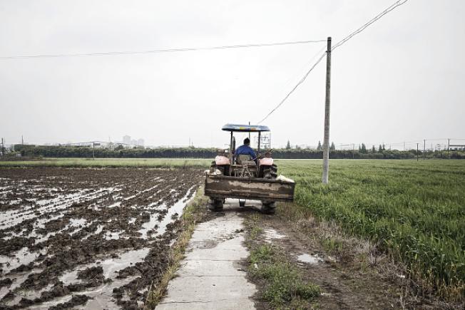中國農地越來越少,上海郊區可耕種面積被市區建築物包圍。(Getty Images)