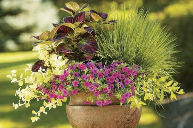 容器花園的花卉搭配也是一門學問。(取自Pinterest)