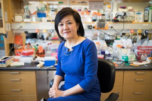 華裔科學家蔡立慧的科研突破,有助於阿茲海默症的治療。(MIT)