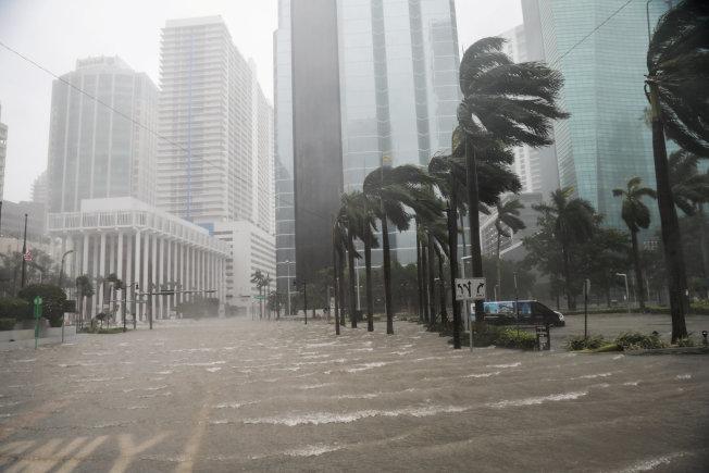 厄瑪颶風10日上午以四級威力登陸南佛州, 狂風暴雨,聲勢驚人,邁阿密街道上的棕櫚樹,被吹得東倒西歪。(路透)