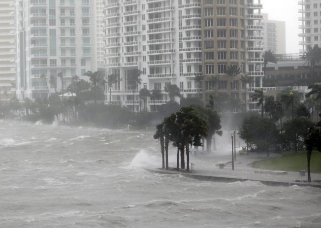 厄瑪颶風10日上午以四級威力登陸南佛州, 狂風暴雨,聲勢驚人,邁阿密街道上的棕櫚樹,難抵強風,被吹得東倒西歪。(美聯社)