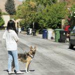 遛狗也被罵 華人憂類仇恨犯罪