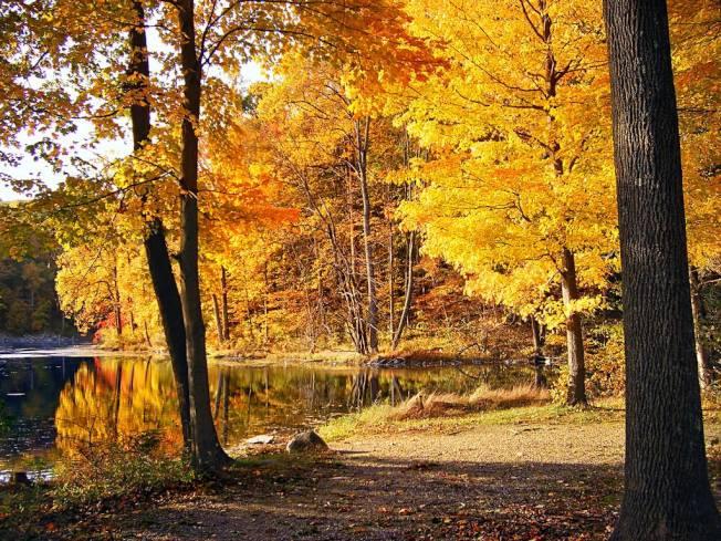 新賓州居民有望在今年秋季看到比往年更壯觀的秋色。(取自VisitNJ臉書)PP
