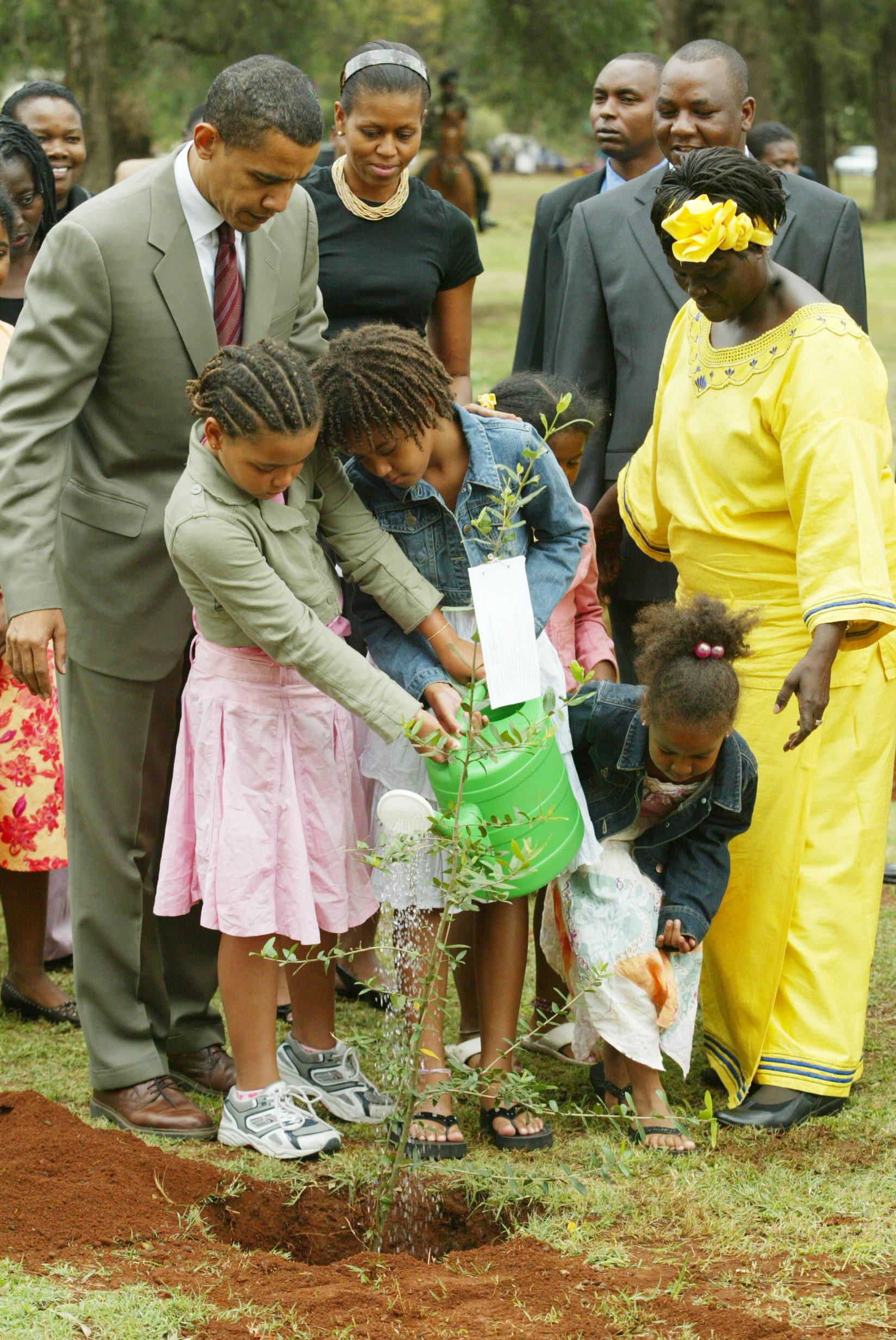 美國前總統歐巴馬(時任參議員)與瑪泰於2006年8月28日,在奈洛比種植非洲橄欖樹,歐巴馬的女兒一旁協助。 (美聯社) (註:歐巴馬為2009年諾貝爾和平獎得主,也是在10月10日宣布獲獎消息。諾貝爾委員會強調歐巴馬對促進全球和平對話,化解衝突做出貢獻。)