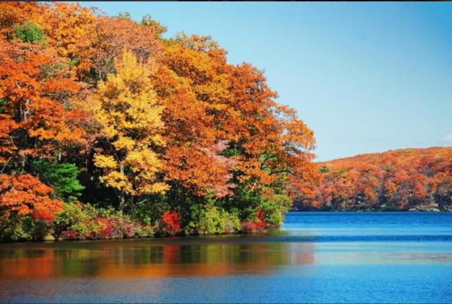 金秋到來,紐約州「楓」景如畫。(取自I Love New York推特)