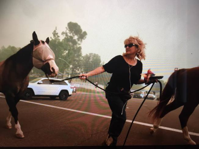 圖為安那罕岡山火發生後居民在著馬匹撤離,還為馬兒蒙上眼罩,以受到驚嚇。(取自臉書,Stacey Read Richards提供)