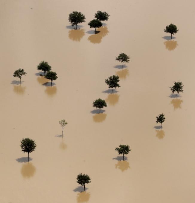 圖為德州自由堡(Freeport)附近布拉佐斯河(Brazos River)遭受颶風哈維侵襲後,洪水淹沒了陸地上的樹木。(美聯社)