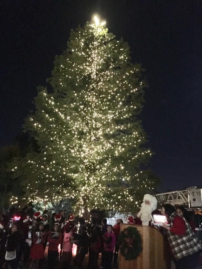庫比蒂諾市政府於昆蘭社區中心進行聖誕樹點燈,吸引許多民眾前往。(記者林亞歆/攝影)