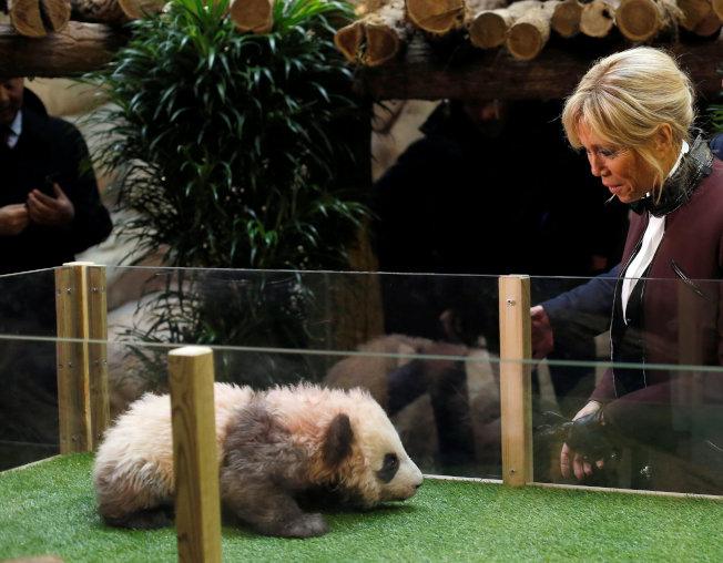 在法國出生四個月的熊貓寶寶名叫「圓夢」。