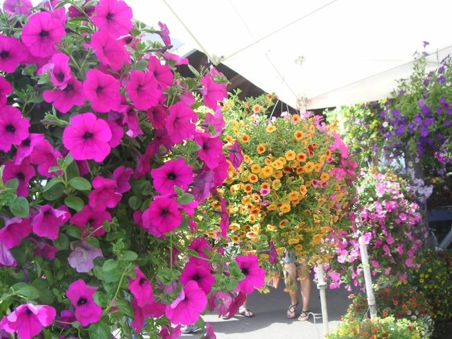 悬挂在入口处的花蓝美得让人心醉。