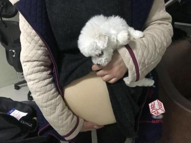 女孩從假肚皮下拿出一隻小狗。(取材自楚天都市報)
