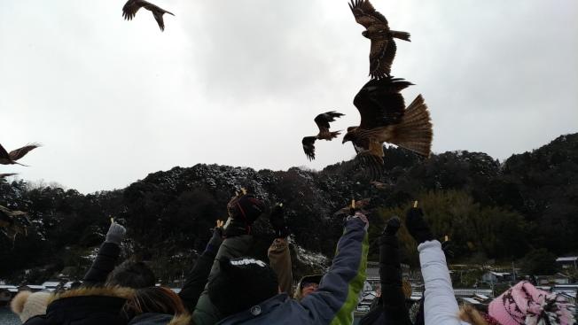 搭伊根遊覽船,從海上眺望舟屋,還可以餵食老鷹。記者楊德宜/攝影