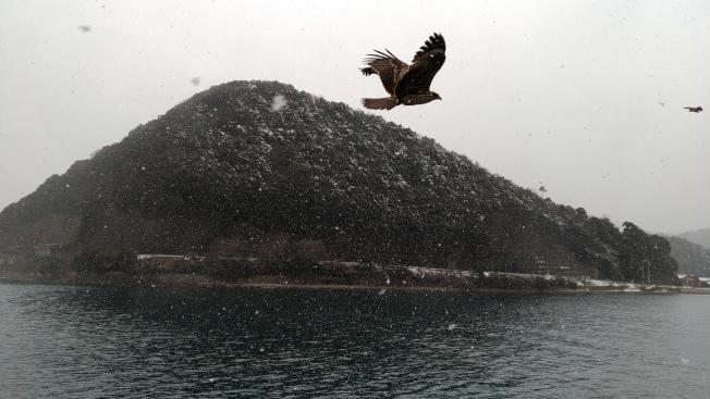 搭伊根遊覽船,會有老鷹追逐。記者楊德宜/攝影
