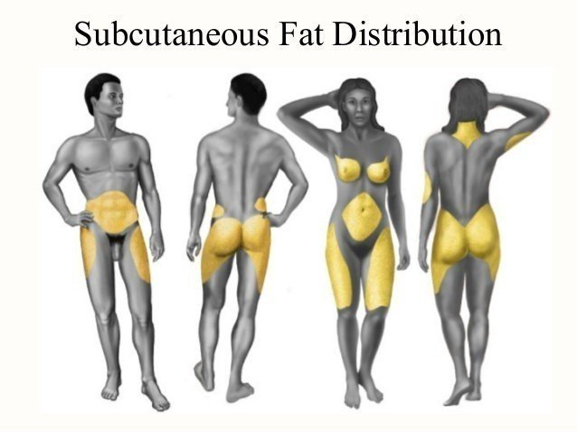 男女容易囤积脂肪的身体部位。图取自微博