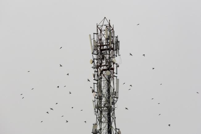 手机和无线通讯普及之后,骚扰电话随之而来,就像图中的手机信号塔上的飞鸟一样,向四方传播。 (美联社)