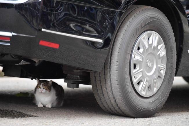 赖瑞躲在美国总统专车「野兽」车底。图╱Getty Images