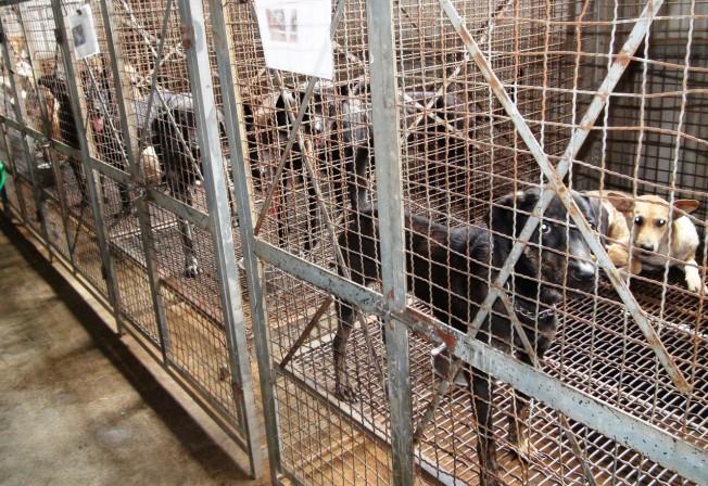 立法院經濟委員會今天審理動保法修正案,立委提案吃狗肉、貓肉者,將處5至25萬元罰款,以杜絕民眾吃狗、貓肉的行為。