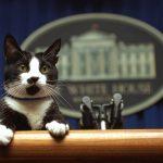 1994年3月19:白宮第一貓「襪子」成新聞秘書?