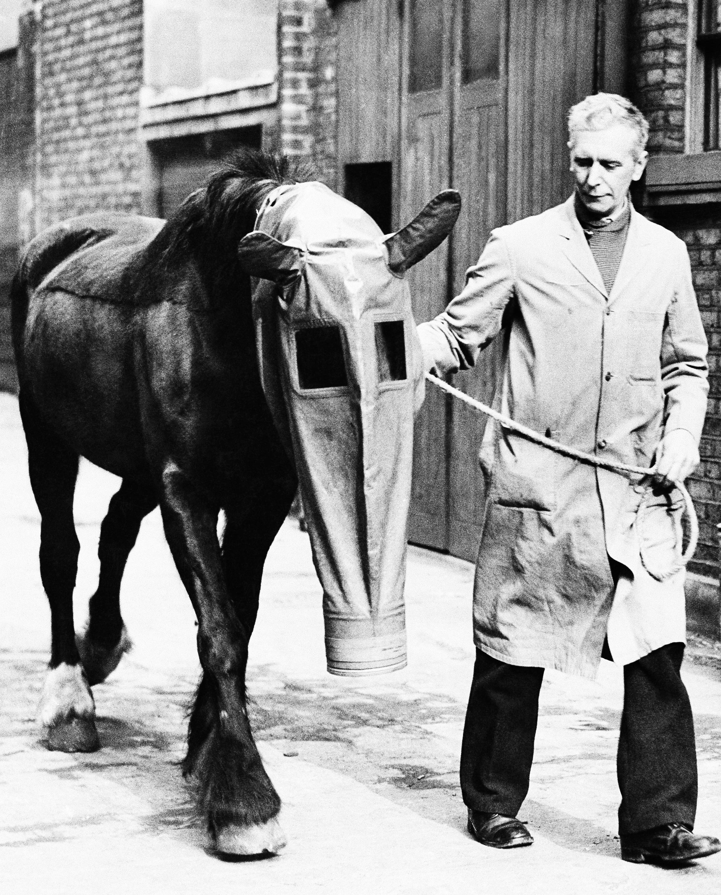 圖3:馬匹也有獨特的防毒面具。(文:許振輝/圖:美聯社、Daily Record)