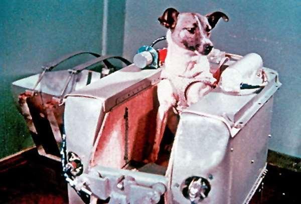 第一隻太空狗Laika雖然犧牲,蘇聯發行了郵票以為紀念。(圖片來源:astronomos.org)