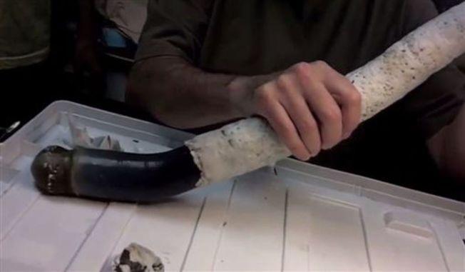 巨蛀船蛤從硬殼裡滑出。(翻攝自美國國家科學院院刊影片)