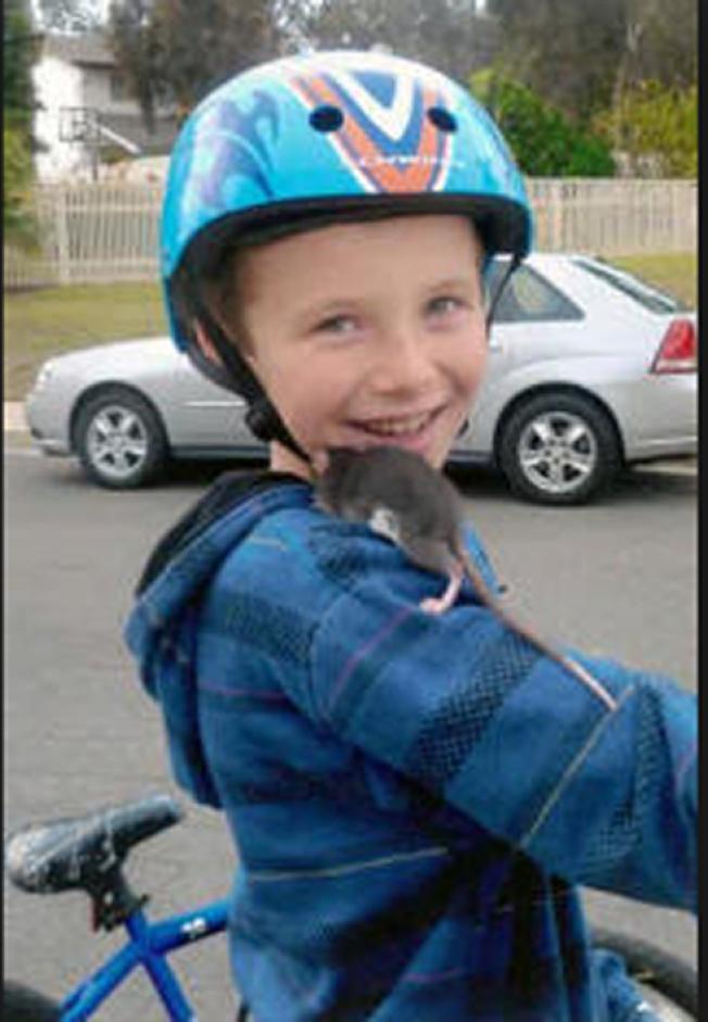 十歲男童Aidan Pankey酷愛祖母帶他到Petco店買的寵物鼠Alex,然而,兩周後他即染上鼠咬熱,不治身亡。(ABC電視台)