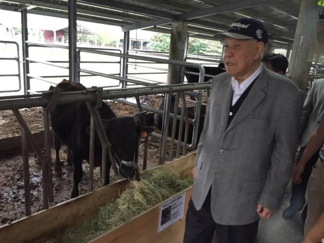 前總統李登輝在花蓮兆豐農場養牛,牛隻來自陽明山擎天崗,讓外界對這些牛的「身世」感到好奇。圖/取自李登輝臉書
