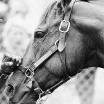 1973年6月9日:「超級賽駒」奪得賽馬三冠王