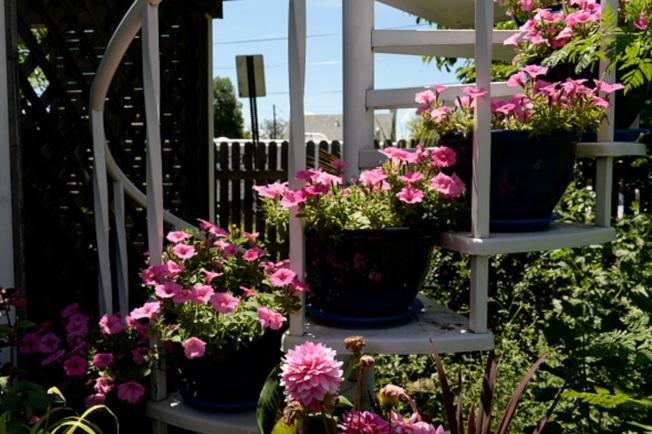 容器花園的空間延展性更大,可以延著台階擺放。(Getty Images)