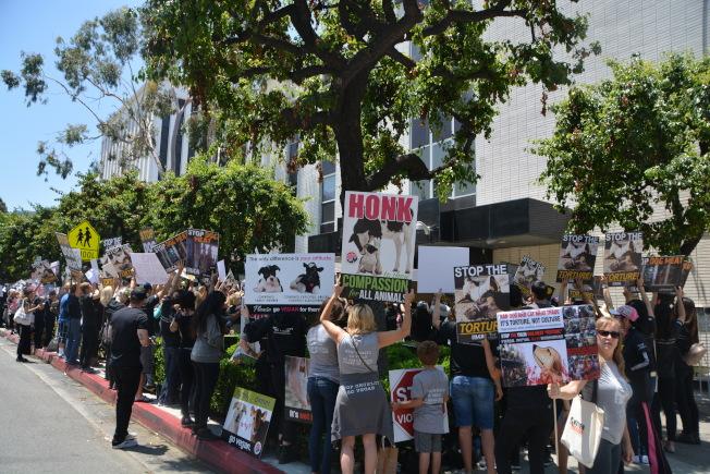 來自洛杉磯各地的愛狗人士身著統一服裝,9日聚集在中國駐洛杉磯總領館門口遊行和示威,抵制玉林狗肉節。(記者張宏/攝影)