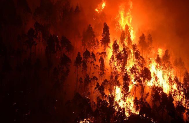 葡萄牙中部17日發生森林大火,至少造成62人死亡,為葡萄牙半世紀來「最大的慘劇」。(Getty Images)