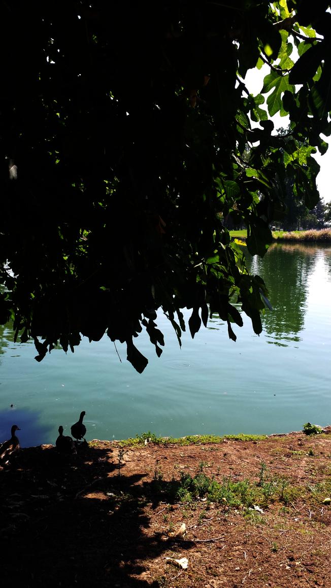 池邊一角。