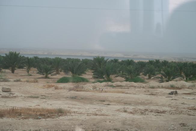 以色列在沙漠中種植果樹,綠意盎然,四周土地卻寸草不生。