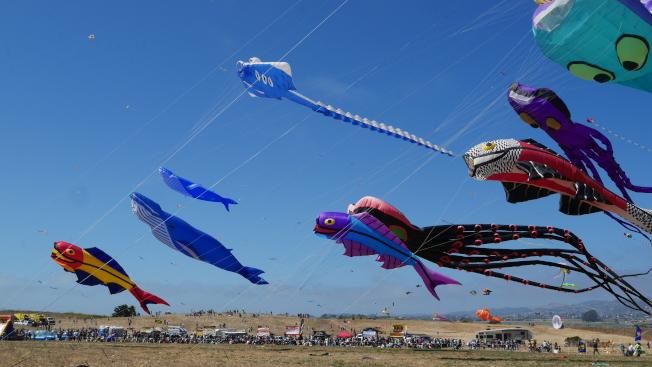由「柏克萊牧箏人」提供的巨型風箏展示。這些風箏長達100呎,寬約20呎。