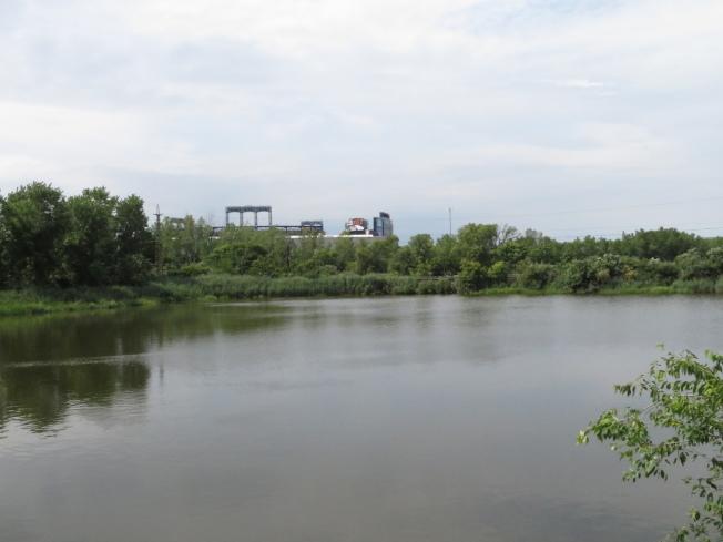 法拉盛溪水域呈深綠色,污染嚴重。(記者陳小寧/攝影)