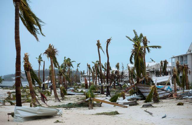 颶風厄瑪橫掃法屬聖馬丁島,連樹都被吹得光秃秃的。(Getty Images)
