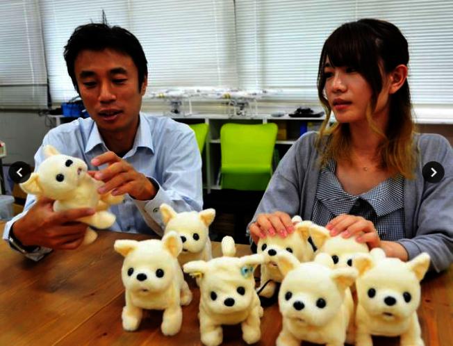 日本新創公司研發出機器狗小鼻,牠能幫忙聞腳丫子,要是腳真的太臭,會立刻暈倒。(取材自朝日新聞網站asahi.com)