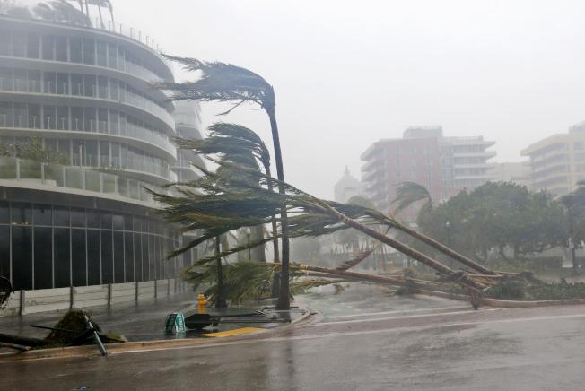 厄瑪颶風10日上午以四級威力登陸南佛州, 狂風暴雨,聲勢驚人,街道上的棕櫚樹難抵強風,整排被連根拔起,傾倒路面。(美聯社)