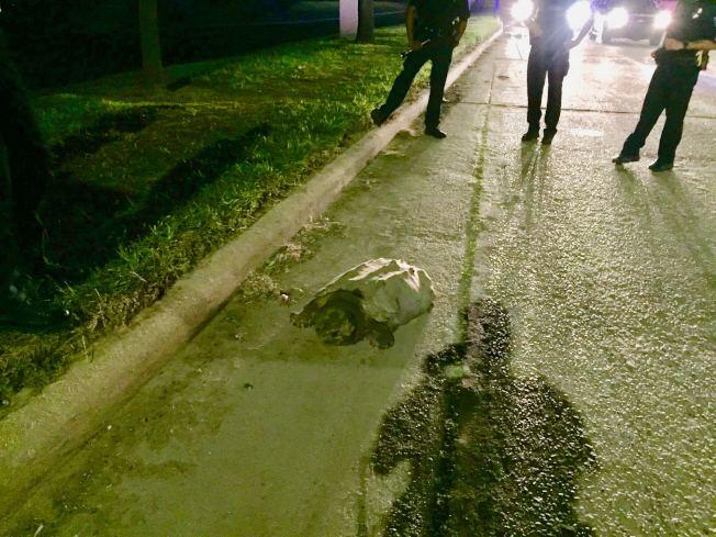 鱷龜被驅趕至路邊但不願意配合工作人員進入運輸盒。(休士頓警局提供)